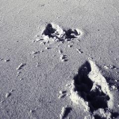 sq_footprint_sand1